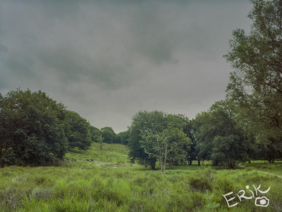 Landschap – Nederland – Meinweg